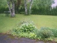 На каком расстоянии от забора сажать дерен для живой изгороди